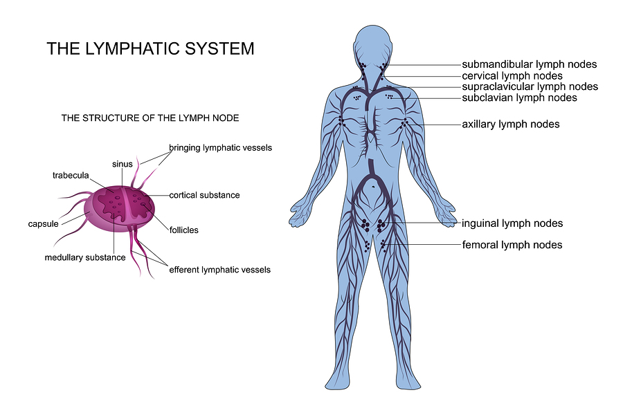 Anti Aging Effects Of Lymphatic Drainage Electrolysis By Shelly