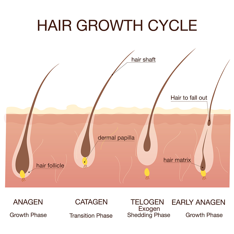 Electrolysis Regrowth Questions Answered